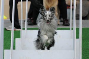 addestramento cani sport