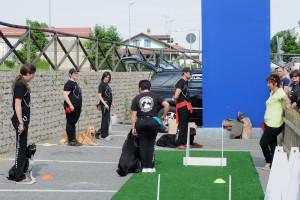 addestramento-cani-torino