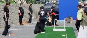 cropped-addestramento-cani-torino2.jpg